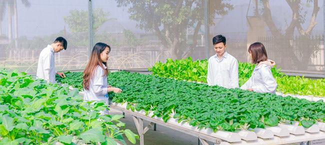 Cơ hội việc làm ngành nông nghiệp công nghệ cao