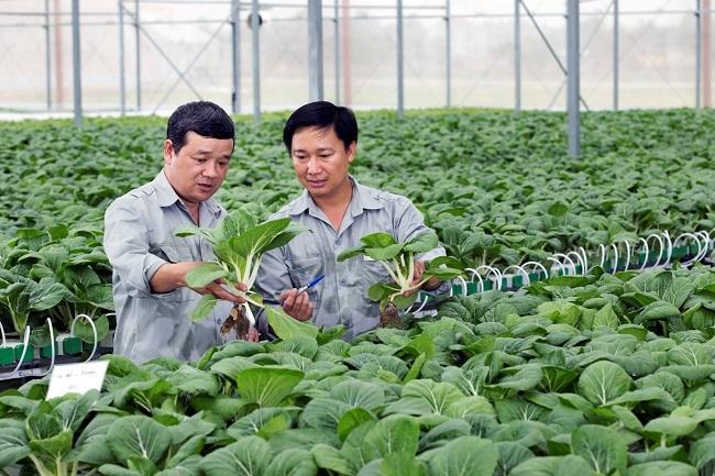 Học ngành nông nghiệp làm việc ở đâu?
