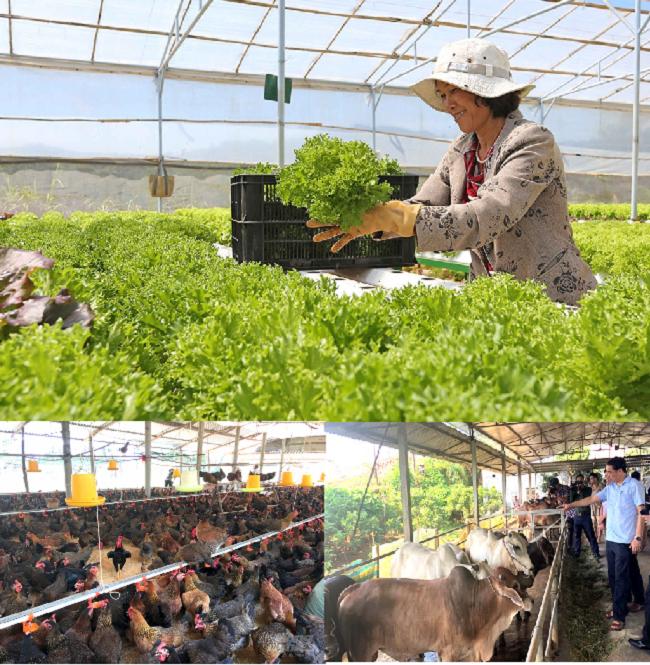 Mô hình chăn nuôi gia súc gia cầm kết hợp trồng nông sản