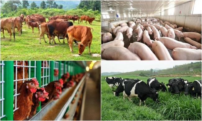 Chuyên ngành chăn nuôi