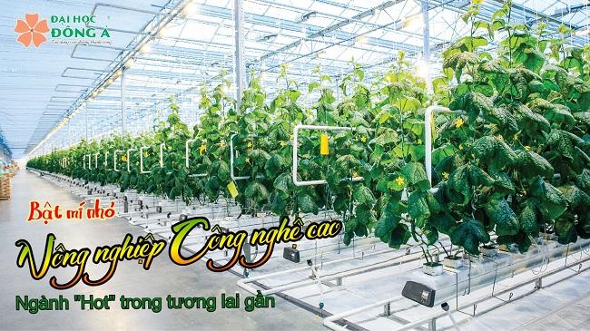 Nông nghiệp công nghệ cao là ngành gì?