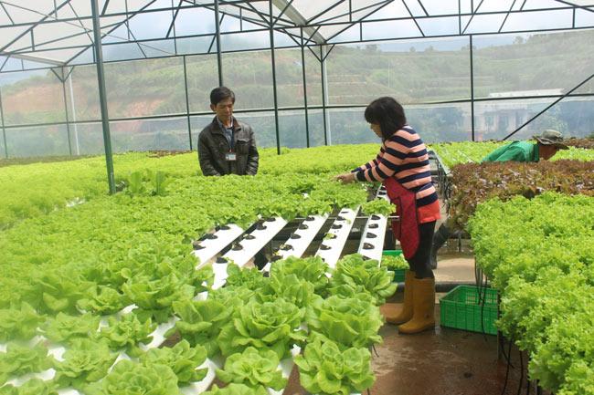 Nông nghiệp công nghệ cao ở thái lan