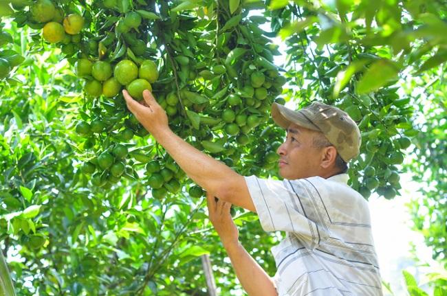 Phát triển trang trại trái cây