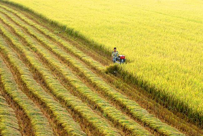 Ngành nông nghiệp