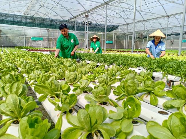 Thực trạng ngành nông nghiệp Việt Nam hiện nay
