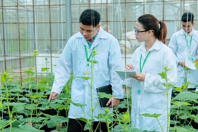 Thực trạng nông nghiệp Việt Nam hiện nay
