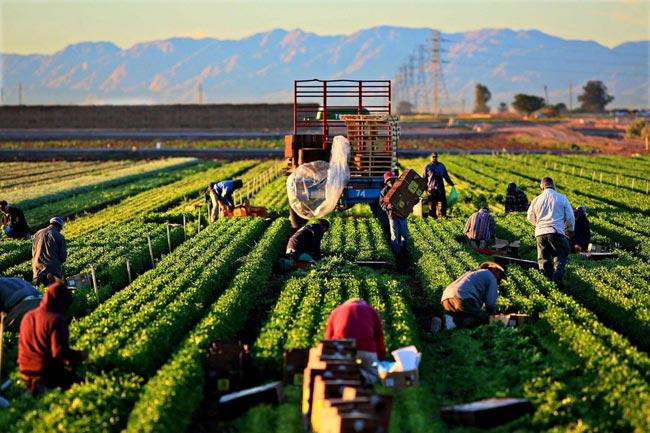 Tìm hiểu đôi nét về ngành nông nghiệp