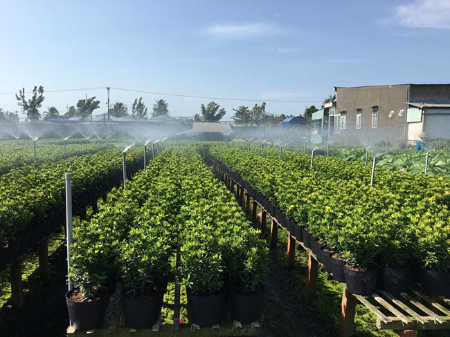 Vai trò của ngành nông nghiệp công nghệ cao