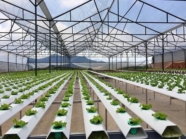 Vai trò của nông nghiệp công nghệ cao