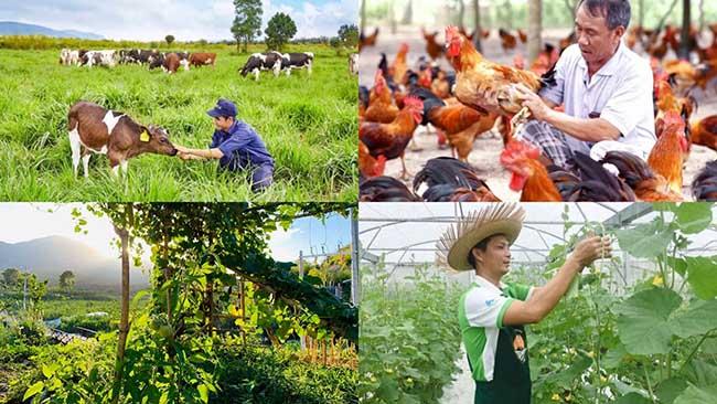 Mô hình làm giàu từ nông nghiệp