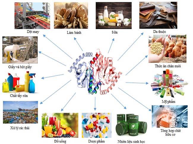 Ứng dụng của enzyme trong công nghệ chế biến thực phẩm